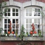 Liten trädgård på fönsteravsatsen Royaltyfri Fotografi