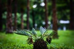 Liten trädkruka Arkivfoto