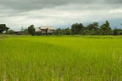 Liten träkoja på risfält Arkivfoton