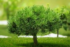 liten tree Arkivfoto
