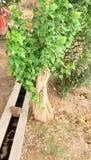liten tree royaltyfria foton