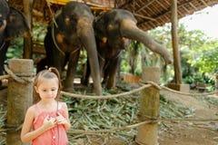 Liten trevlig flicka som står nära tämjde och bundna elefanter royaltyfri foto