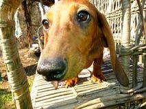 Liten trevlig hund Royaltyfria Foton