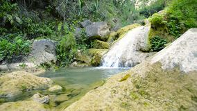 Liten tropisk flod arkivfilmer