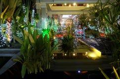 Liten tropisk tr?dg?rd som dekoreras med julpynt dekorativ lighting tr?dg?rds- tr?dg?rdar hamilton New Zealand f?r design natt arkivbilder