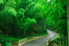 Liten väg i bambudungarna Royaltyfria Bilder