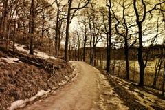 Liten väg i en vintrig skog Royaltyfria Bilder