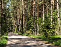 Liten väg som leder till och med skogen Arkivfoto