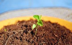 liten växt Arkivfoton