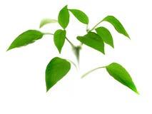 liten växt Arkivfoto