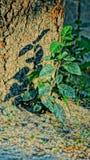 liten växt Royaltyfria Foton