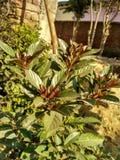 liten växt arkivbilder