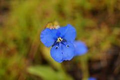 Liten växt av blåa kronblad som formas som en fjäril royaltyfri bild