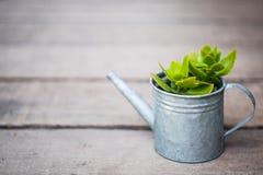 Liten växt, i att bevattna för zink arkivfoto