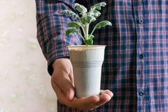 Liten växt i krukainnehav i händer Royaltyfri Bild
