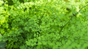 Liten växt i trädgården Royaltyfria Bilder
