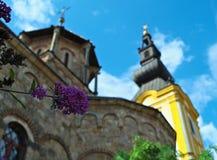 Liten växt med gruppen av lilablommor och kyrkliga torn bak den Royaltyfria Foton