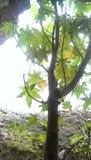 Liten växt med solen som skiner på den Arkivfoto