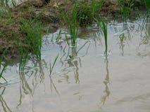 Liten växt på vatten Royaltyfria Foton