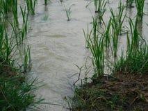 Liten växt på vatten Arkivfoton