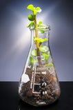 Liten växt som är kommande ut från en laboratoriumexponeringsglaskaraff Arkivfoto