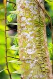 Liten växt som växer på ett träd Royaltyfri Foto