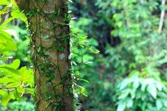 Liten växt som växer på ett träd i skogen Arkivbild