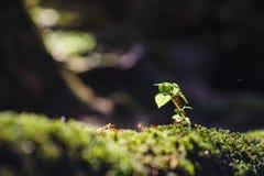 Liten växt under djungeln Arkivbilder