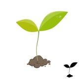 Liten växtgrodd Fotografering för Bildbyråer
