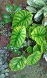 Liten växtkruka Fotografering för Bildbyråer