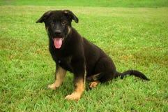 liten valp för gullig hund Arkivfoton