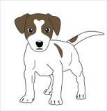 liten valp för gullig hund Fotografering för Bildbyråer