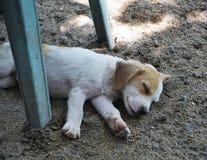 Liten valp som sover i solen på golvet Arkivbild