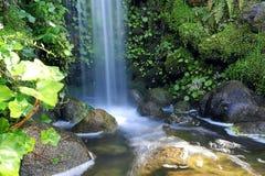 liten vattenfall för skog Arkivfoton