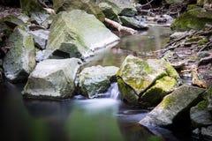 liten vattenfall för skog royaltyfri fotografi