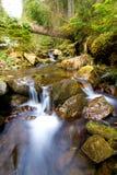 Liten vattenfall i bergskog Royaltyfria Foton