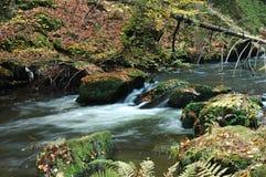 Liten vattenfall i den Czechswitzerland nationalparken Fotografering för Bildbyråer