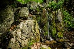 Liten vattenfall i den gröna sommarskogen royaltyfria foton