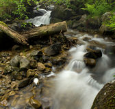 Liten vattenfall i djup skog fotografering för bildbyråer