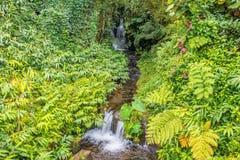 Liten vattenfall i en tropisk skog Arkivfoton