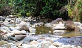 Liten vattenfall i floden på djungeln i Costa Rica under sommar Arkivfoton