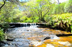 Liten vattenfall i rainforesten på Wentworth Falls, New South Wales, Australien royaltyfria foton