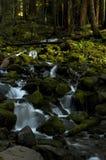 Liten vattenfall i skogen, staten Washington Royaltyfri Bild