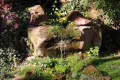 Liten vattenfall i zoo i nuremberg i Tyskland royaltyfri foto