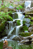 Liten vattenfall och fågel Arkivbilder