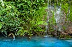 Liten vattenfall och gräsplanmossa med olika växter och blått vatten royaltyfri bild