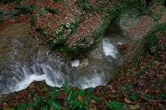 Liten vattenfall på en bergström i nedgången, rent vatten Royaltyfria Bilder