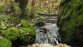 Liten vattenfall på en liten vik arkivfilmer