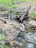 Liten vik eller ström med träd och bruna sidor i skog royaltyfria bilder
