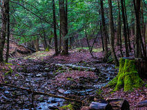 Liten vik i Forsten Arkivfoton